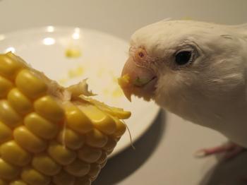 corn10.jpg