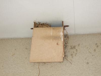 ツバメの巣4月19日