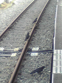 20091224124901