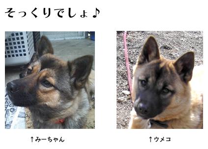 umeko14.jpg