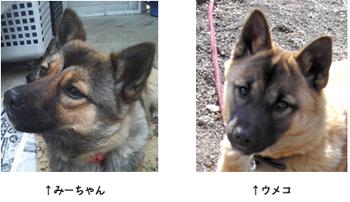 umeko_mi.jpg
