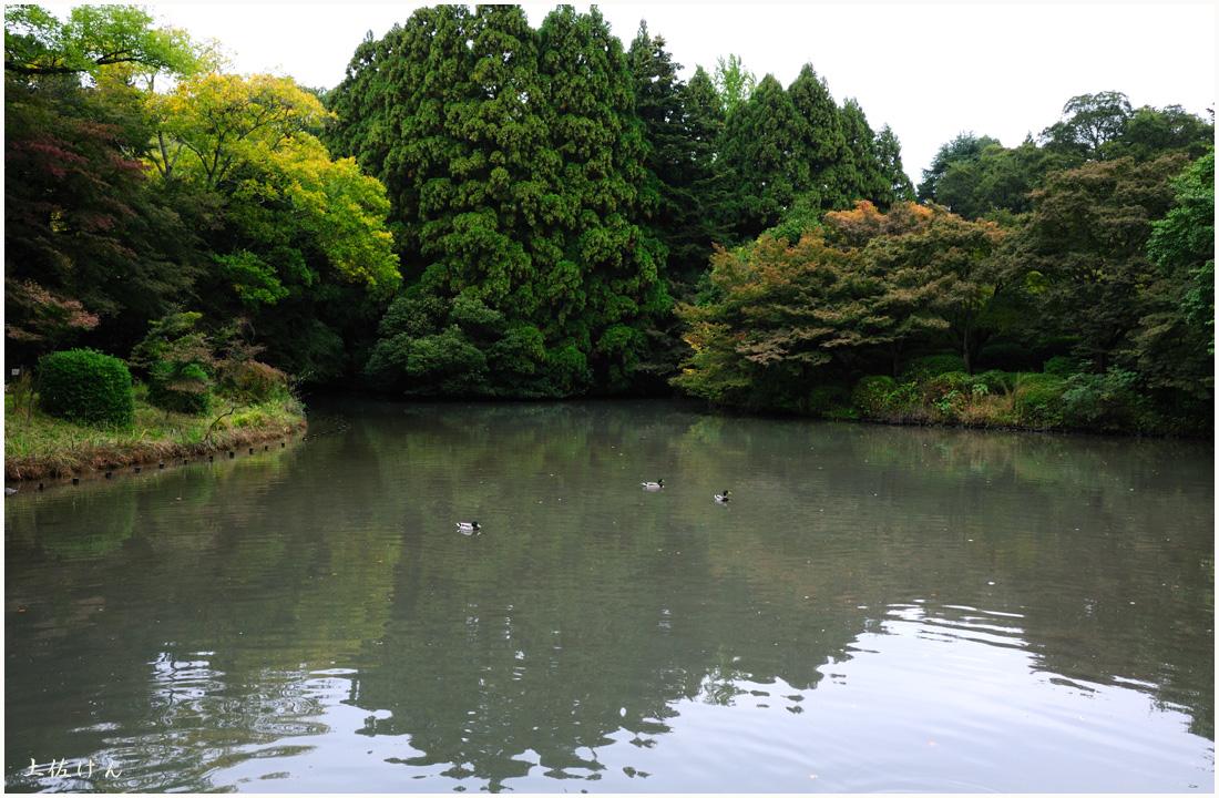 京都府立植物園4