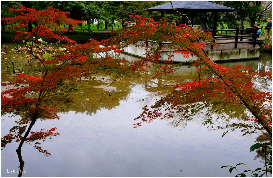 京都府立植物園5