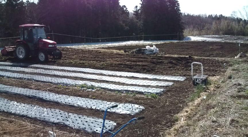 3月30 日無肥料・自然農法の畑作り