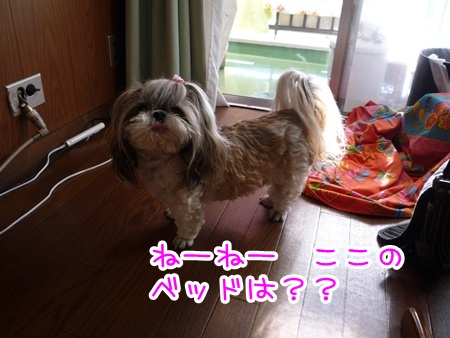 P1070836_20101214224745.jpg