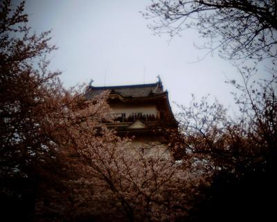 桜咲く小田原城:Entry