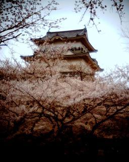 桜に浮かぶ小田原城:Entry