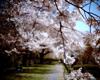 春の1日:Entry