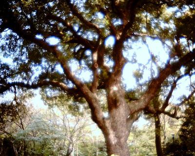 大きな木:Entry