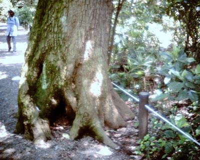 木の顔:Entry