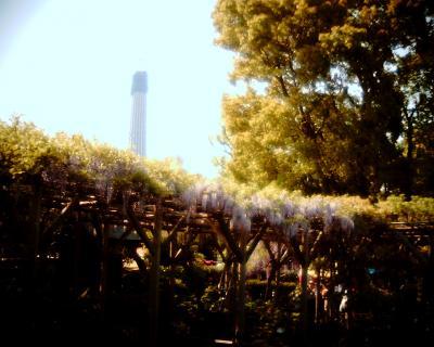 藤の花とスカイツリー2:Entry