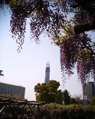 藤の花とスカイツリー1:R2改