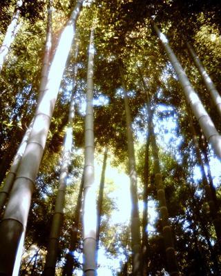 竹やぶ:Entry