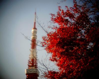 モミジと東京タワー:R2