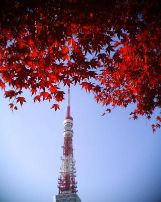 東京タワーにモミジ:R2