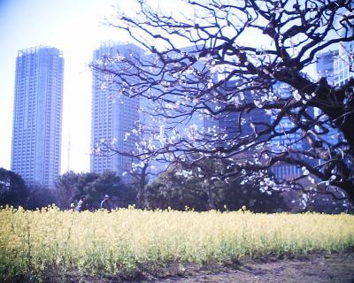梅と菜の花、東京タワー:R2