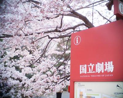 桜・国立劇場前:R2