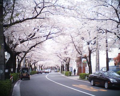 桜のトンネル:R2