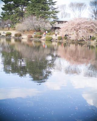 池に映る修善寺寒桜:R2