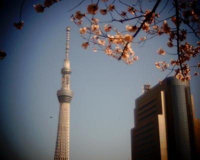 東京スカイツリーと桜2012A:Entry