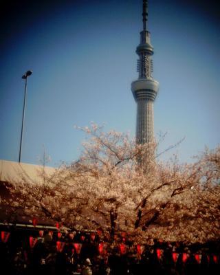 東京スカイツリーと桜2012B:Entry