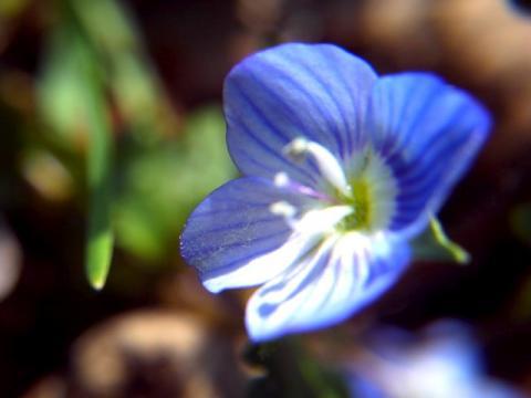 PICT0688_convert_20120315134611.jpg