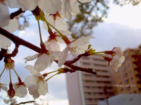 PICT0745_convert_20120411215026.jpg