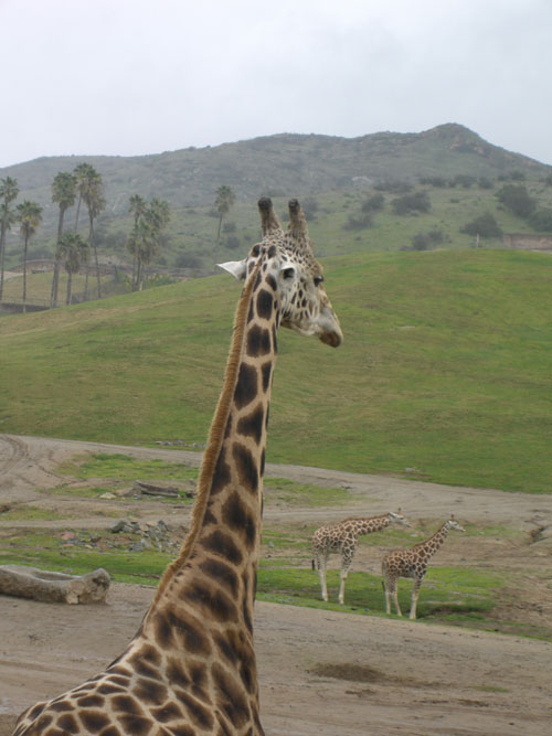 animalpark2.jpg