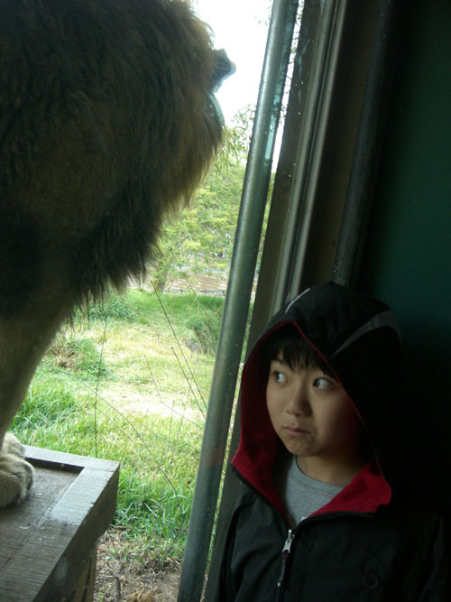 animalpark4.jpg