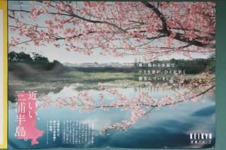 100220_KQ_sakura_poster.jpg