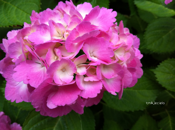 243_iPone4 季節は紫陽花の頃へ
