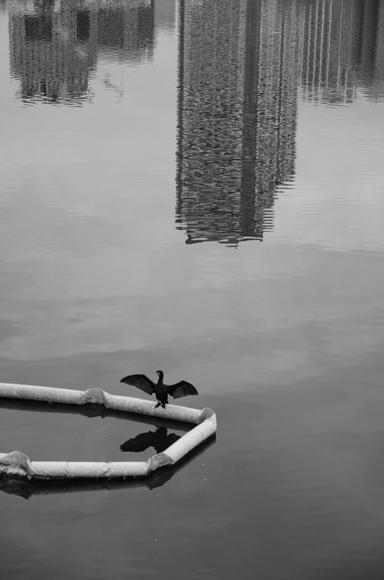 運河-16_R