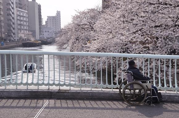 桜-17_R