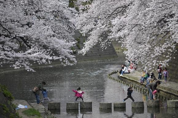 桜-25_R