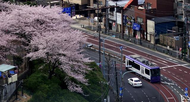 asukayama20110410.jpg