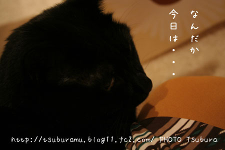 IMG_6303.jpg