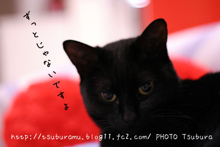 IMG_6394.jpg