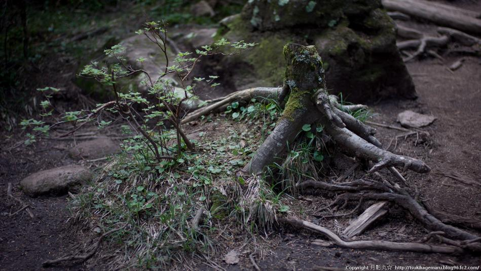 天然の盆栽的な