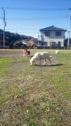 NEC_0048_20101129182003.jpg
