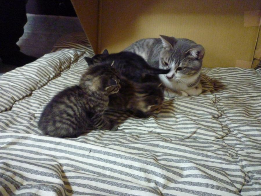 子猫とチマ兄
