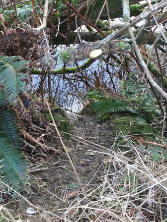 beaver slide