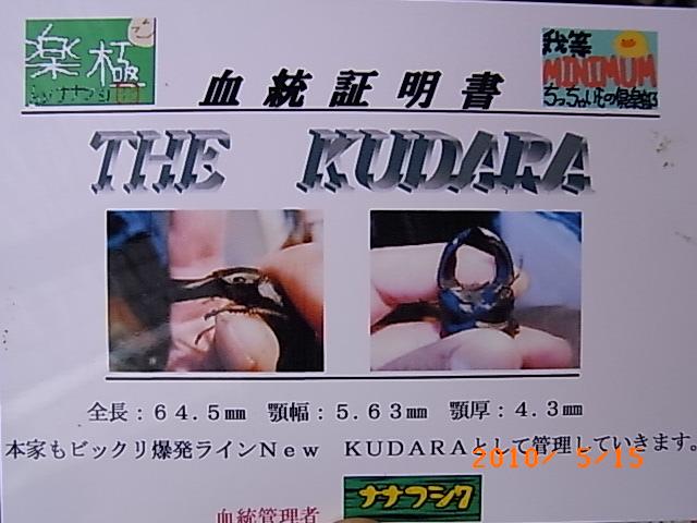 THE KUDARA 004