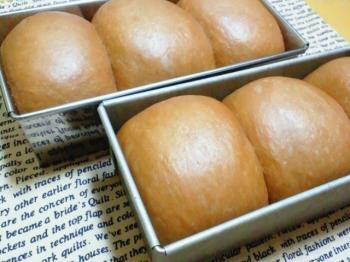 ミニココア食パン