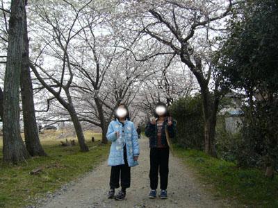 2010sakura2.jpg