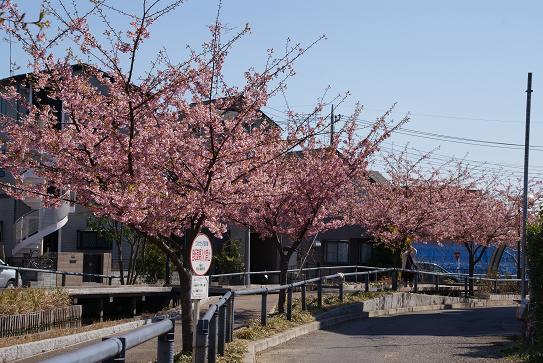 江川せせらぎ遊歩道1