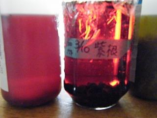 紫根INF