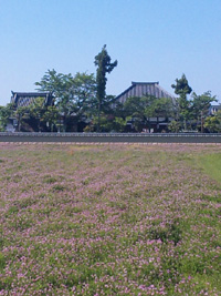 asuka-1.jpg
