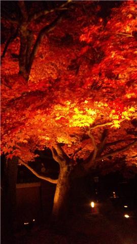 高台寺 ライトアップ