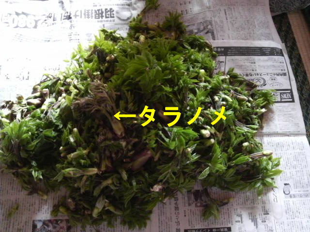 2010050416290001.jpg