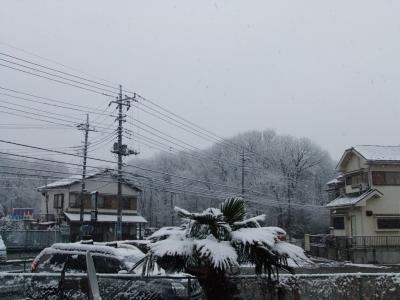 朝起きたら雪